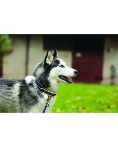 Amigo® Dog Collar Atlantic Blue/Ivory
