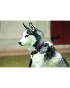 Amigo® Dog Collar Chocolate/Raspberry