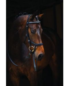 NEW! Rambo® Micklem Diamante Competition Bridle