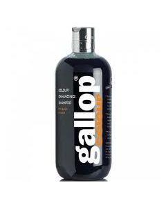 Gallop Shampoo Black